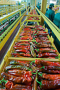 fresh peppers on a conveyor belt in a greenhouse. Photographed in Israel