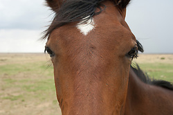 close up a a horse's face on a ranch