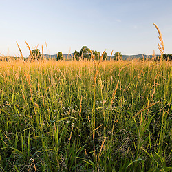 A hayfield on the Conte National Wildlife refuge in Hadley, Massachusetts.