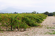 vineyard domaine montirius vacqueyras rhone france