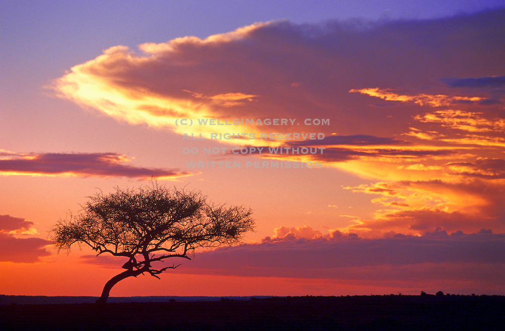 Image of a dramatic sunset at the Masai Mara National Reserve in Kenya, Africa by Randy Wells
