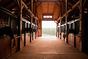 Heads of horses poke out of their stalls inside of a stable in rural North Carolina