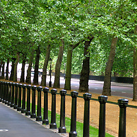 United Kingdom, Great Britain; England; London. A shady bike lane along London's Royal Gardens.
