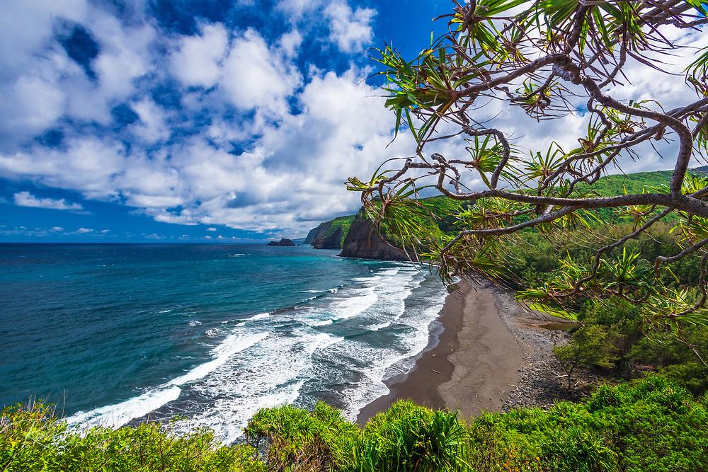 Pololu Valley and beach through hala trees, North Kohala, The Big Island, Hawaii USA