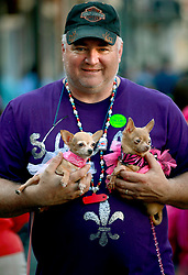 27 Jan 2013. New Orleans, Louisiana USA. .The Mystic Krewe of Barkus. Tony Pavack with his Chihuahuas Princess and Mini Mouse. Following the theme 'Here Comes Honey Bow Wow,' the parade parodies a popular media title as dogs and their owners parade through the French Quarter in one of the most irreverent parades of the season..Photo; Charlie Varley