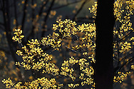 Spring leaves, Louguantai temple, Xian, Shaanxi, China. This temple is where Lao Tze wrote the basics of the Tao/Dao faith.