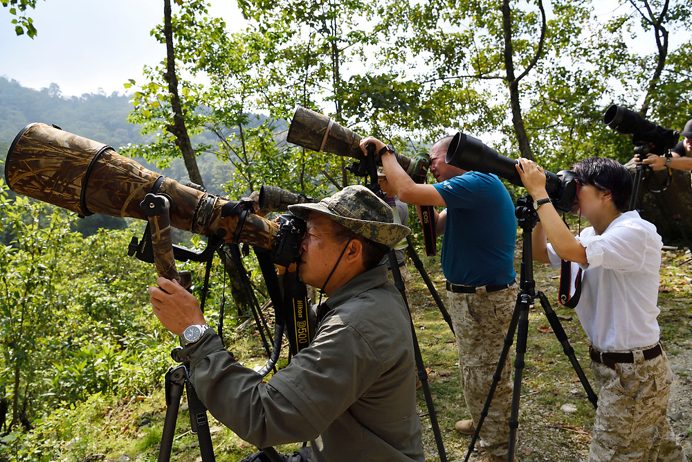 Chinese wildlife photographers looking through their cameras and taking pictures at He Xin Chang Forest reserve, Dehong Prefecture, Yunnan Province, China
