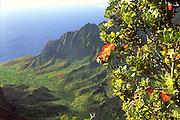 Ohia tree, Kalalau Lookout, Kokee State Park, Waimea Canyon, Kauai, Hawaii, USA<br />