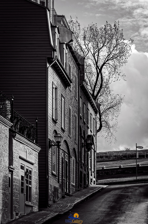 Homes and trees. Quebec City, Canada.