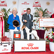 AKC National Championship Puppy Stakes 2019