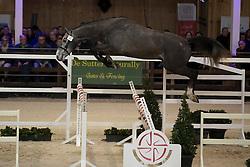 008 - Okido Du Coeur Des Collines <br /> VRIJSPRINGEN<br /> Hengsten keuring BWP - Koningshooikt 2017<br /> © Dirk Caremans<br /> 27/12/2016