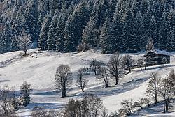 THEMENBILD - Bäume auf einer verschneiten Bergwiese, aufgenommen am 11. Dezember 2019, Piesendorf, Österreich // trees in a winter meadow on 2019/12/11, Piesendorf, Austria. EXPA Pictures © 2019, PhotoCredit: EXPA/ Stefanie Oberhauser