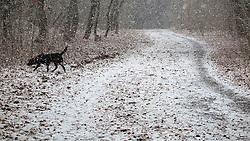 GERMANY BERLIN 26DEC14 - Walking Milli, the Labrador dog in a park in Pankow, Berlin.<br /> <br /> jre/Photo by Jiri Rezac<br /> <br /> © Jiri Rezac 2014