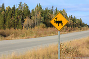 Wildlife, like caribou, abound along the ALCAN Highway and drivers best pay attention to the road.