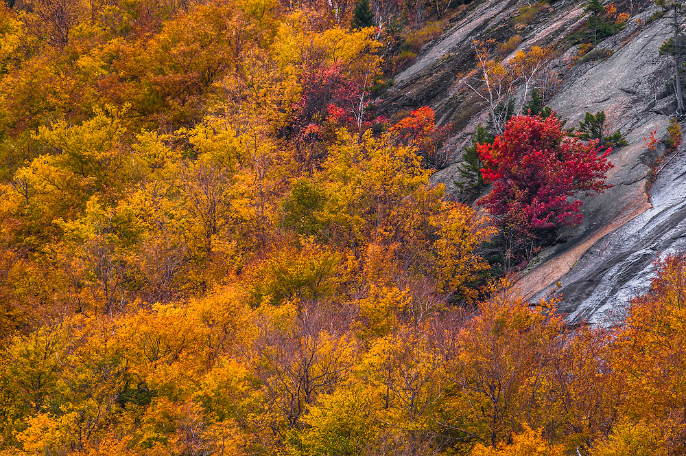 Yellow fall colors with one dash of red & rocky cliffs on mountainsides, Crawford Notch State Park, White Mountain National Forest, Harts Location, NH