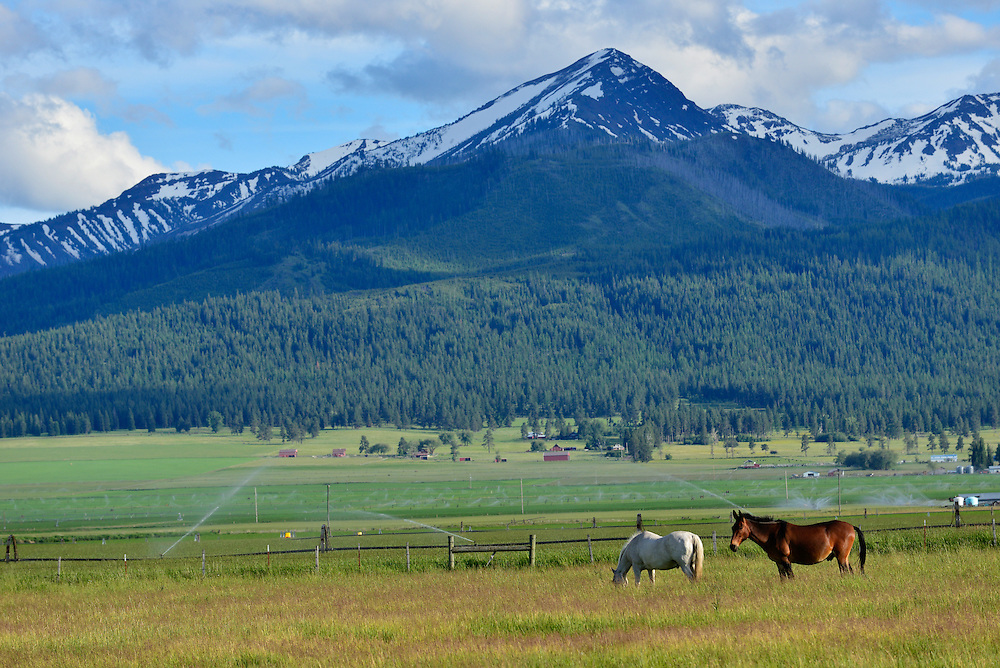 Horses and farms in Oregon's Wallowa Valley.
