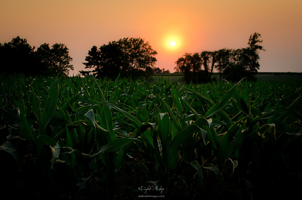 A week into summer and the temps where breaking records. Looking over a corn field at the setting sun in Richwood, NJ.