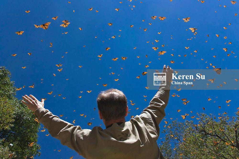 Tourist watching Monarch butterflies, Michoacan, Mexico