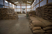 Coffee processing factory, beans ready for export. Coorg or Kadagu is the largest coffee growing region of India, in the state of Karnataka, the inhabitants - the Kodavas have been cultivating crops such as coffee, black pepper and cardamon for many generations.