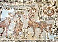 4th century Roman mosaic panel of the Goddess Venus from Ulules (Elles), Tunisia. Venus of Aphrodite is accompanied by 2 female centaurs, half women half horse creatures, known as Am(azoniu) and Titonius. The are crowning Venus The Bardo Museum, Tunis, Tunisia. The Bardo Museum, Tunis, Tunisia .<br /> <br /> If you prefer to buy from our ALAMY PHOTO LIBRARY  Collection visit : https://www.alamy.com/portfolio/paul-williams-funkystock/roman-mosaic.html - Type -   Bardo    - into the LOWER SEARCH WITHIN GALLERY box. Refine search by adding background colour, place, museum etc<br /> <br /> Visit our ROMAN MOSAIC PHOTO COLLECTIONS for more photos to download  as wall art prints https://funkystock.photoshelter.com/gallery-collection/Roman-Mosaics-Art-Pictures-Images/C0000LcfNel7FpLI