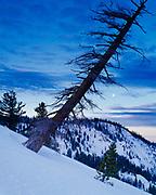 Winter view of leaning snag on ridge north of Alta Peak between Pear and Aster Lakes, Tokopah Valley beyond, Sequoia National Park, California.