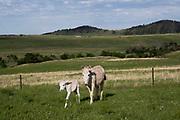 Wildlife Custer State Park, SD