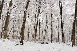 04 January 2021: Winter scenes captured after the 2021 New Years Day ice storm and subsequent snow on Central Illinois<br /> <br /> Funks Grove