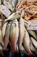 Fresh Sea Food & Fish,  Bass - Chioggia - Venice Italy
