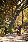 Fox hunters lead the hounds at the Middleton Place Fox Hunt at Middleton Place plantation in Charleston, SC. The hunt is a drag hunt where a scented cloth is used instead of live fox.