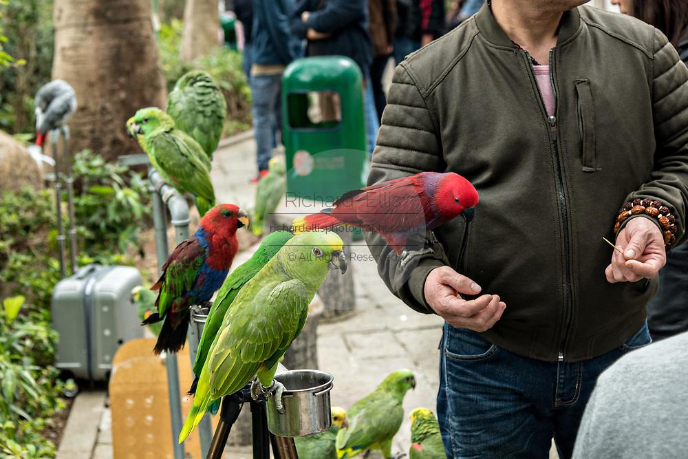 Bird enthusiasts show off their exotic birds at the Yuen Po Street Bird Garden in Mong Kok, Kowloon, Hong Kong.