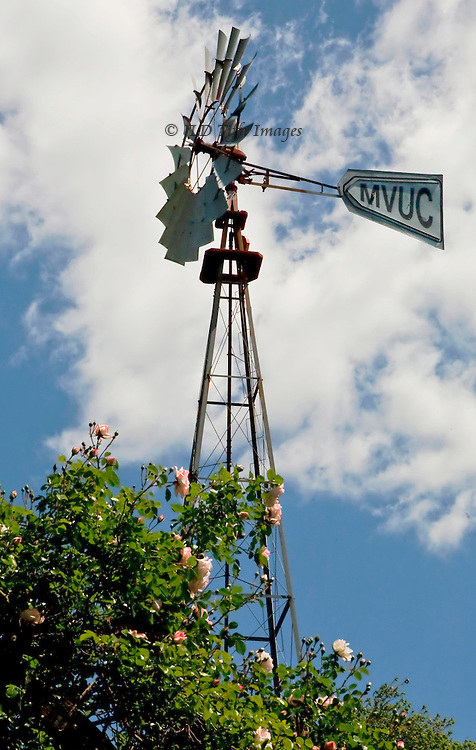 Restored windmill in spring, among blooming pink roses, silhouetted against bright white clouds and clear blue sky.  MVUC on the blade refers to Mount Vernon Unitarian Church, on which property the windmill stands.  It has been restored to turn, but no longer pumps water.