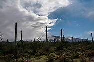 Clouds rolling in at Saguaro National Park