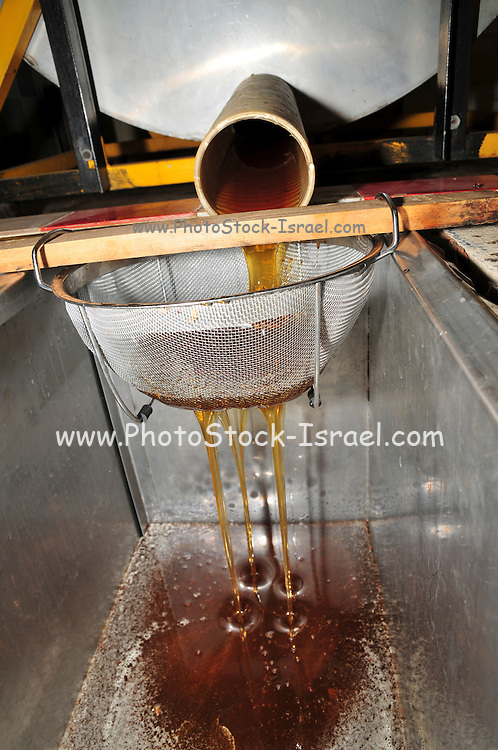 Extracting honey from beehive frames.