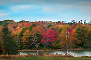 This was captured along Pleasant Beach Road in South Thomaston Maine