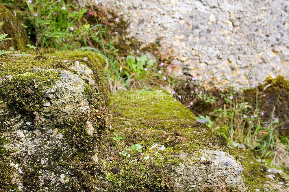 Moss covered stone steps on exterior of farm building in Ireland