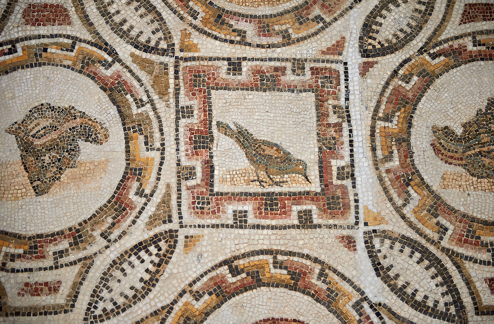 Picture of a Roman mosaics design depicting shells and birds, from the ancient Roman city of Thysdrus. 3rd century AD, House of Selinus. El Djem Archaeological Museum, El Djem, Tunisia. .<br /> <br /> If you prefer to buy from our ALAMY PHOTO LIBRARY Collection visit : https://www.alamy.com/portfolio/paul-williams-funkystock/roman-mosaic.html . Type - El Djem - into the LOWER SEARCH WITHIN GALLERY box. Refine search by adding background colour, place, museum etc<br /> <br /> Visit our ROMAN MOSAIC PHOTO COLLECTIONS for more photos to download as wall art prints https://funkystock.photoshelter.com/gallery-collection/Roman-Mosaics-Art-Pictures-Images/C0000LcfNel7FpLI