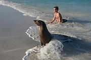 Galapagos Sealion (Zalophus wollebaeki)<br /> Gardner Bay, Española or Hood Island, GALAPAGOS ISLANDS<br /> ECUADOR.  South America<br /> Zach Montes
