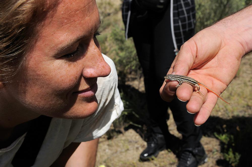Judith Lingemann checks out a Podarcis psamodromos.Campanarios de Azába reserve.Salamanca district, Castilla y León, Spain