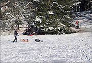 Nederland, Berg en Dal, 28-12-2014In de bossen rond Nijmegen gaan veel mensen wandelen of laten hun hond uit in het sneeuwlandschap. Kinderen spelen met hun slee. Ook de honden vinden het leuk.FOTO: FLIP FRANSSEN/ HOLLANDSE HOOGTE