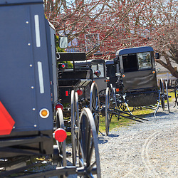 Gordonville, PA, USA - March 10, 2012: Some of the Amish buggies parked at a mud sale.