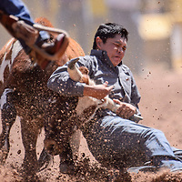 090514       Cable Hoover<br /> <br /> Tyron Tsosie digs in for a 6.9-second steer wrestling time during the Navajo Nation Fair Rodeo in Window Rock Saturday.