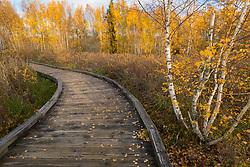 United States, Washington, Bellevue, Mercer Slough Nature Park