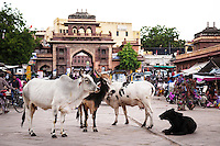 Jodhpur's main shopping area is Nai Sadak, with countless sari and textile shops - leading into Sardar Market, a colorful market with a riot of sights, sounds and smells.  The clocktower is an orientation point and landmark for the Sardar Market Area.