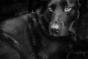 ghent, belgium, 12 oct 2018, portrait of a dog