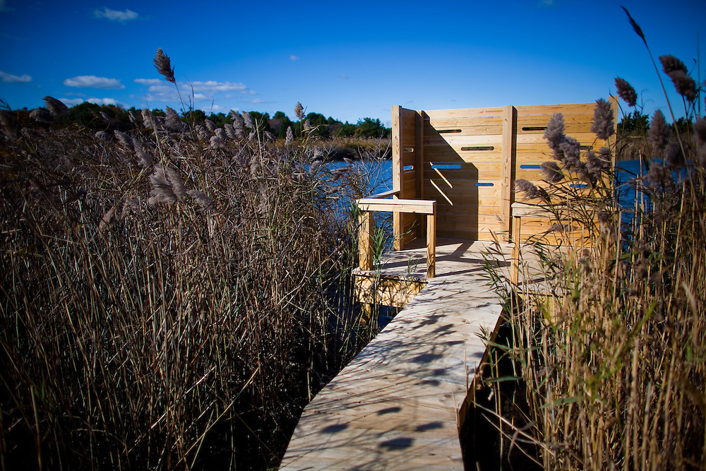 A long boardwalk through the reeds and rushes at Sandy Hook National Park New Jersey that leads to the Nike Pond bird blind.