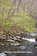 66745-039.18 Middle Prong of the Little Pigeon River in spring, Greenbrier Area, Great Smoky Mountain National Park, TN