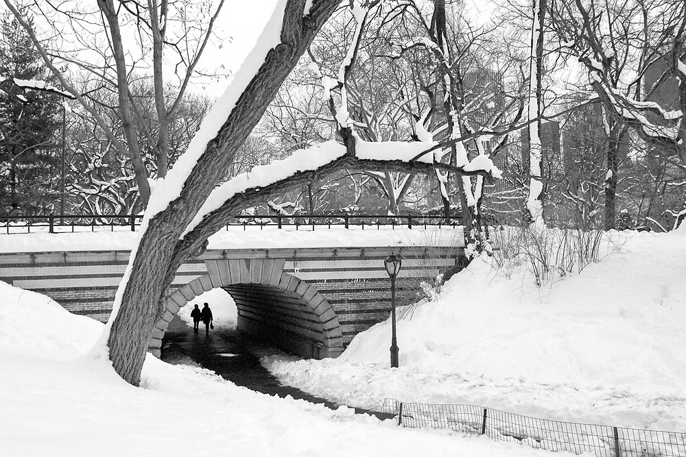 Winter in central park. 2011