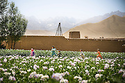 Afghan children run through field of flowers.