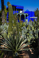 Morocco, Marrakesh. The Majorelle Garden is a botanical garden in Marrakesh.The garden has a large collction of cactus.