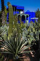 Morocco, Marrakesh. The Majorelle Garden is a botanical garden in Marrakesh.The garden has a large collction of cactus.